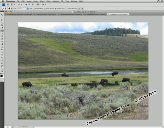 Photoshop CS5 Content Aware Fill Before - Now You See Them Critters...