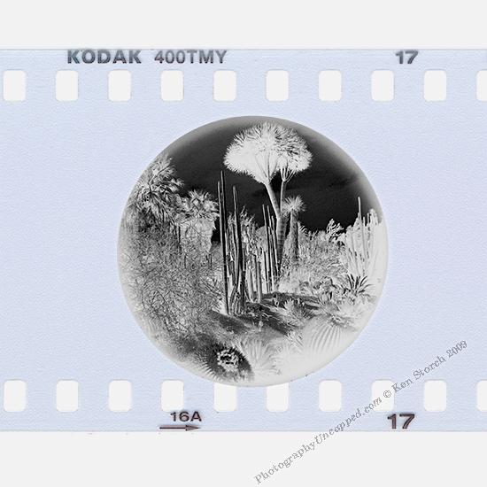 Film Negative on Kodak T-Max 400 TMY Film