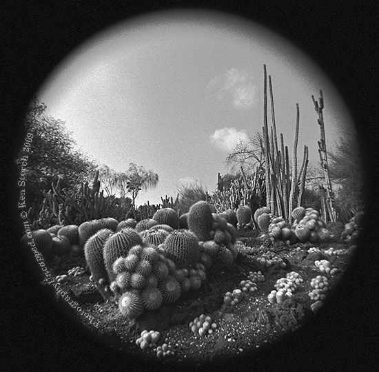 Surreal Cactus Landscape in the Huntington Gardens