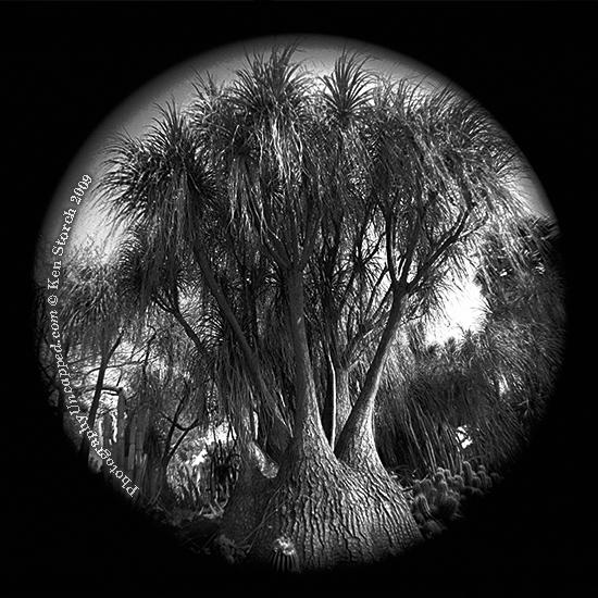 Ultrawide surreal tree image